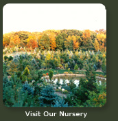 Visit Our Nursery